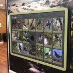 20 button bird sound interactive