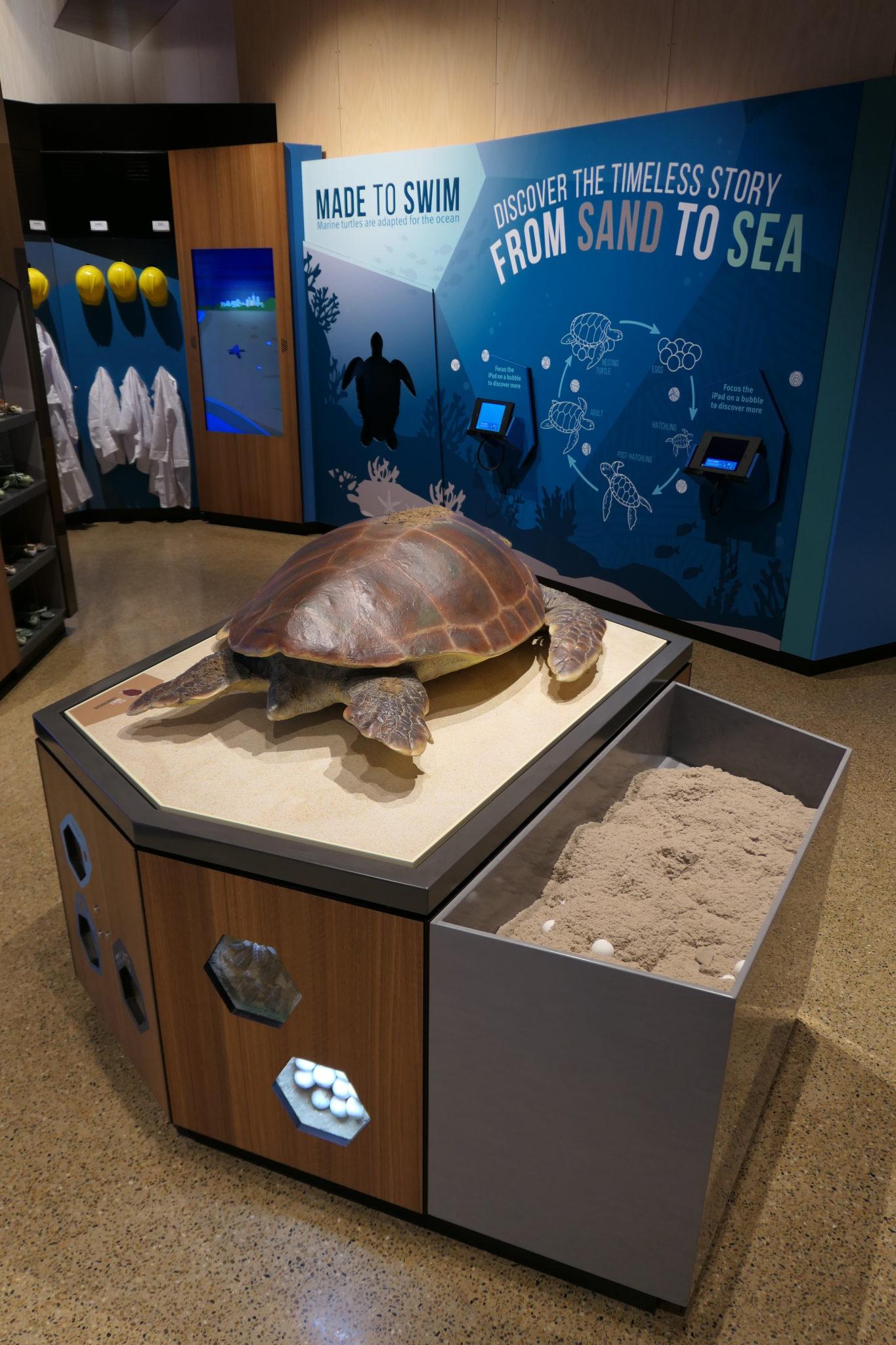 Mon Repos turtle exhibit interactives props